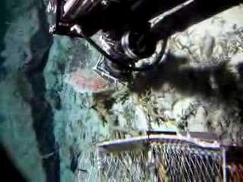 Deep sea coral collection