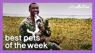 Reunited And It Feels So Good | Best Pets of the Week