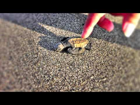 Saving a baby Sea Turtle