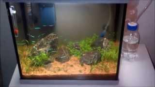 Nano aquarium 2de week