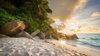 Картинка океан. Природа, пляж, пальмы, берег, океан, растительность, камни, пейзаж.