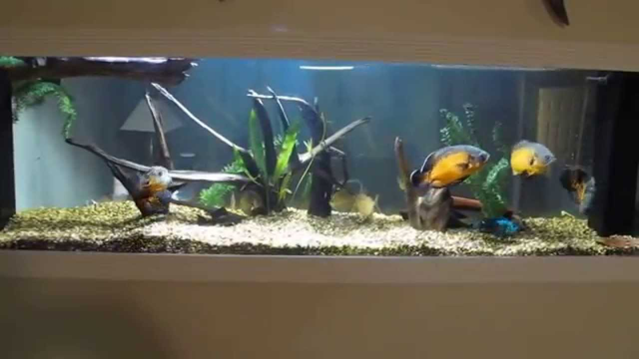 Monster 250 gallon aquarium built into basement wall with for Fish tank built into wall