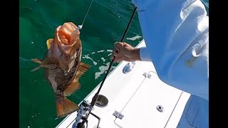 Florida Keys Fishing Fun winter day in the backcountry Great variety of species