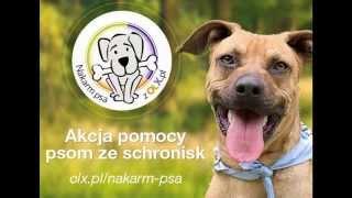 Busko-zdrój 2014,oświęcim, Nakarm Psa Z Olx