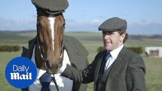 Race horse dresses up in tweed suit for Cheltenham 2016 - Daily Mail