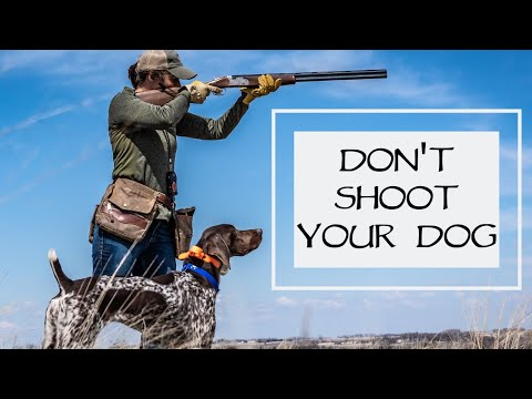 Don't Shoot Your Dog - You Ask We Answer