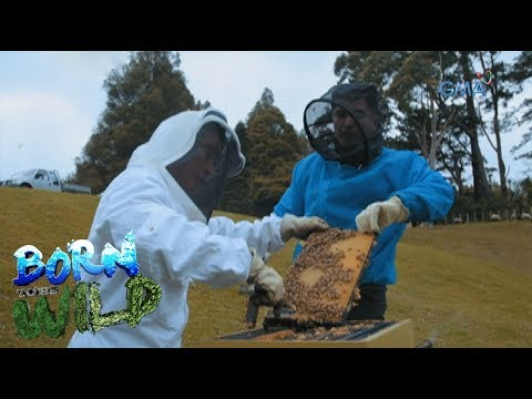 Born to Be Wild: Doc Ferds learns how to harvest the Manuka honey