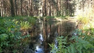 Пискарёвский парк. Санкт Петербург. Живые звуки.