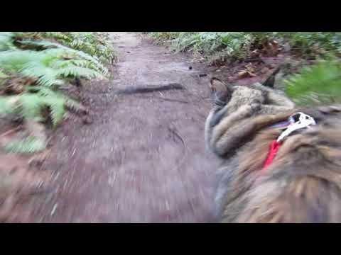 Cat Running On Leash