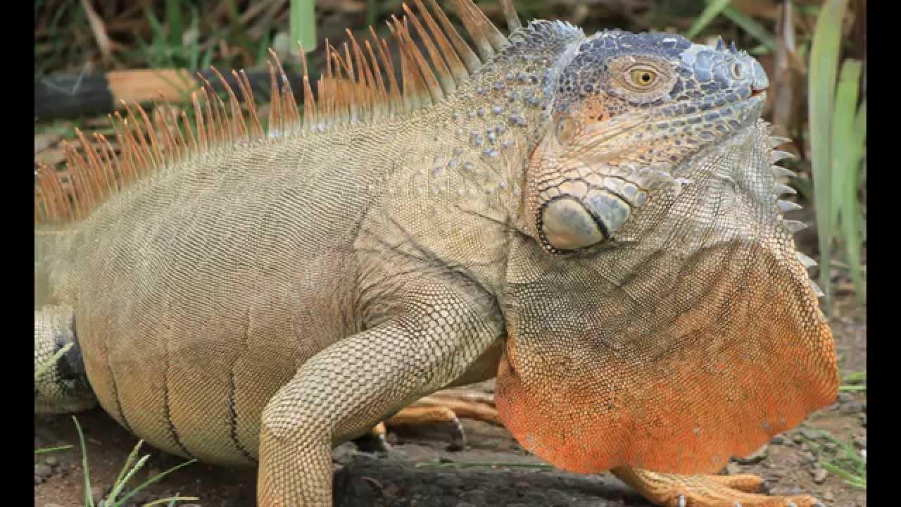 Green iguana exhibit medicinal jungle trail garden - Garden state exhibit center somerset nj ...