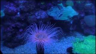 Palma Aquarium - Mallorca - Majorca - Aquarium - Playa de Palma