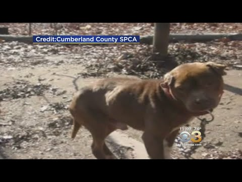New Law Seeks To Crack Down On Animal Cruelty In New Jersey