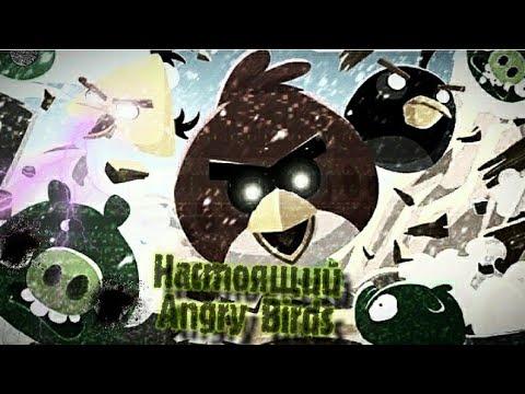 УЖАСНАЯ И ЖУТКАЯ ПРАВДА О ИГРЕ ANGRY BIRDS (Что скрывает всеми любимая игра?)
