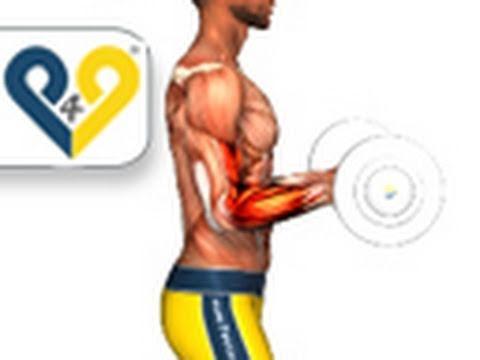 curl biceps barra agarre pronacion