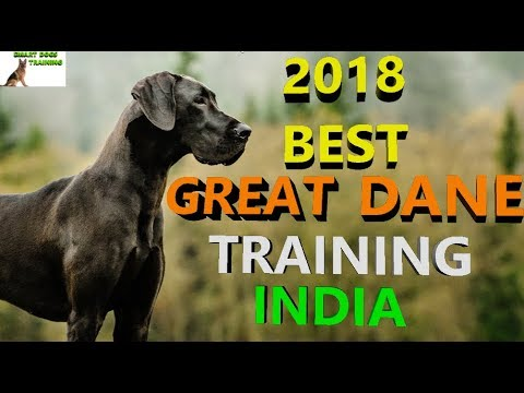 Great Dane Dog Training / Giant Dog Training India Hindi /