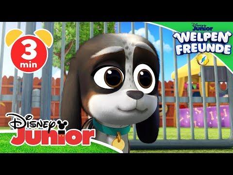 Auf Der Suche Nach Dem Welpen – Welpen Freunde   Disney Junior