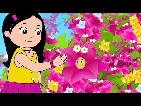 Bougainvillea - Flower