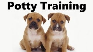 How To Potty Train A Staffordshire Bull Terrier Puppy - Training Staffordshire Bull Terrier Puppies