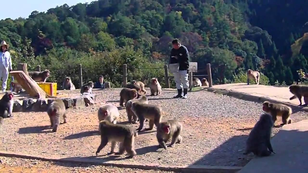 [Japan 2010] Arashiyama Monkey Park Iwatayama - YouTube