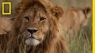 Africa's Big Five Animals: What Are They?
