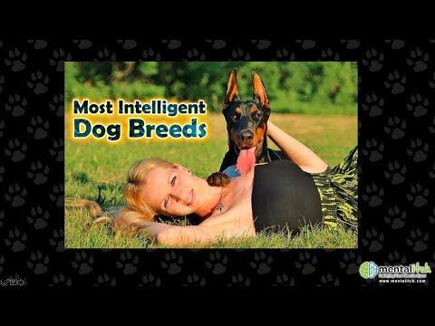 Top 10 Most Intelligent Dog Breeds