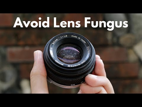 DIY Camera Dry Box For Only $20! | Avoid Lens Fungus!