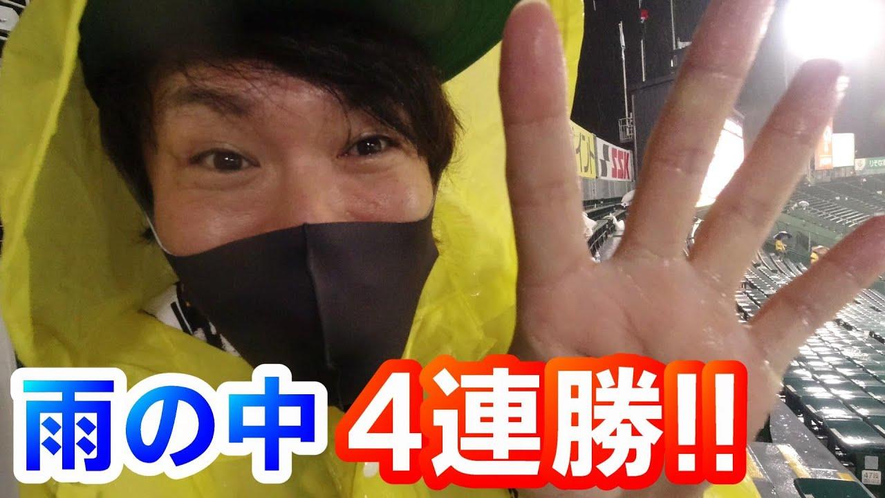 ついに甲子園に阪神ファンが集合!近本先頭打者ホームラン!4番大山ホームラン!青柳粘りのピッチングで雨天コールド阪神4連勝!