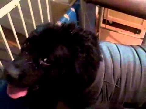 Thunder Shirt For Dogs Does It Work
