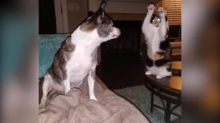 こいつかなりの使い手だ・・・犬に対し怪しい魔術をかける猫