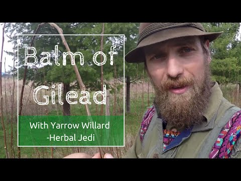 Benefits and Use of Balm of Gilead with Herbalist Yarrow Willard | Harmonic Arts