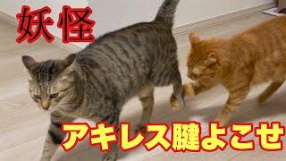 【奇食】猫のアキレス腱は珍味らしい