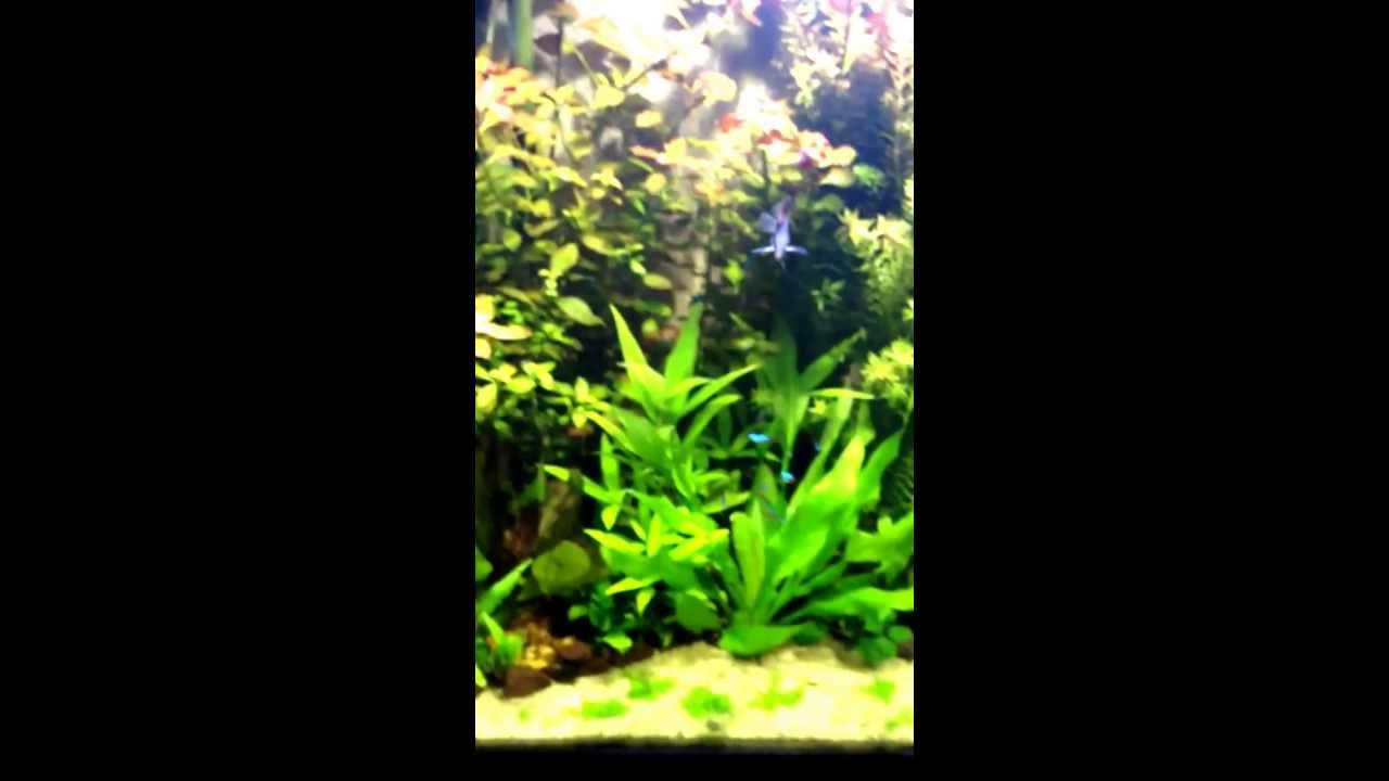 35 Gallon Tall Aquarium! Beautiful Aquascape!