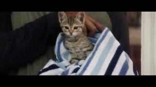 Keanu (2016) Official Trailer [HD] - Jordan Peele, Keegan-Michael Key