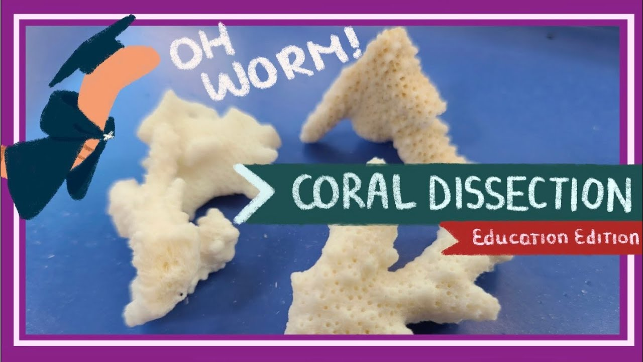 Coral Dissection || Islands Under Fire