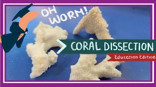 Coral Dissection || Islands Under Fire [EDU]