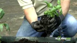 May Gardening Tips - Vegetables and Herbs