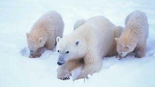 Download Grandes documentales - El mundo polar Mp3 and Videos