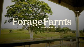Forage Farms, Mary Valley