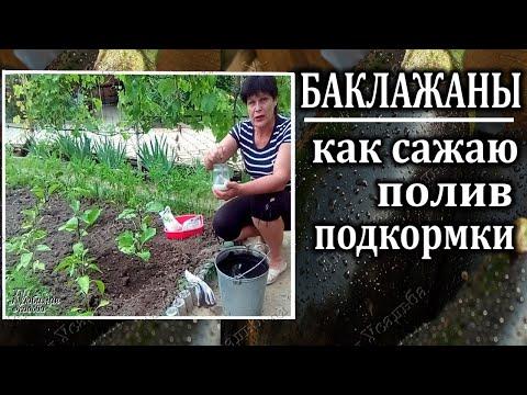 Посадка баклажанов в грунт  Уход Полив Подкормки