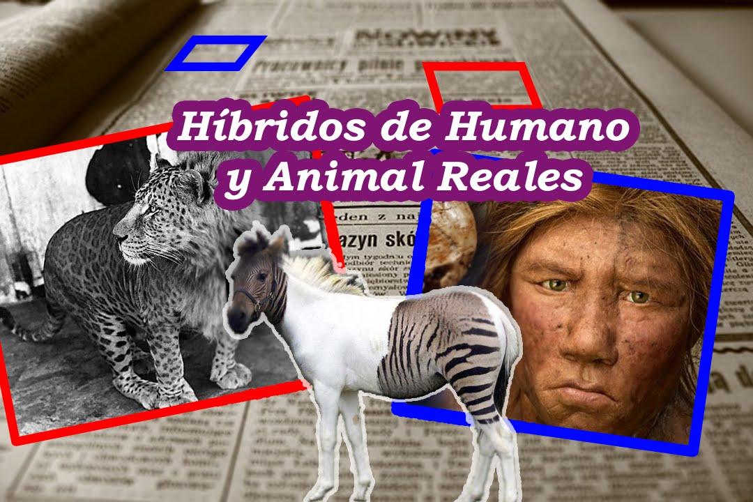 12 Híbridos de Animales