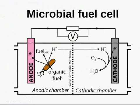 An introduction to biological photovoltaics
