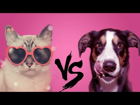 Dog VS Cat : Which Pet is Better for You?