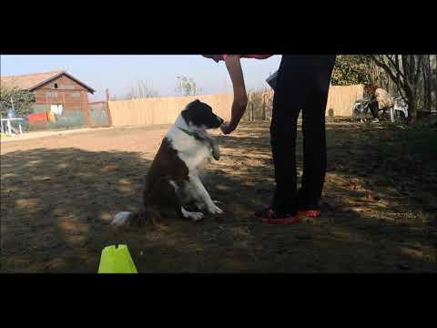 Dog Dancing Miskolc