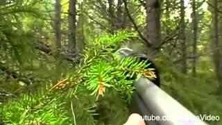 Охота на лося с глушителем видео YouTube