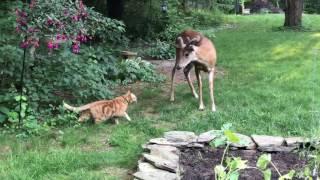 「…というわけだ」「了解した」「ではいずれ」裏庭でのシカと猫とのコンタクト、その真相はいったい?