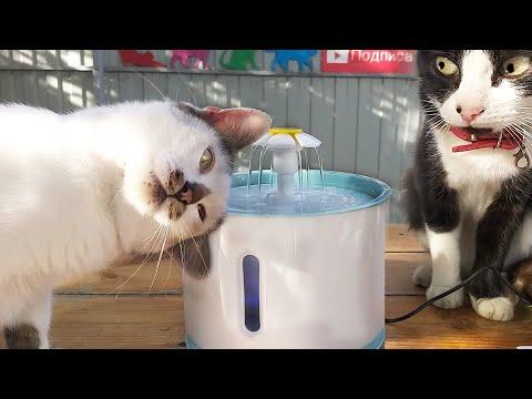 Реакция Кота и Поилка Фонтан для кошек с Алиэкспресс