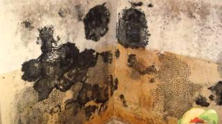 Where To look To Find Black Mold, Mold Abatement? San Francisco CA