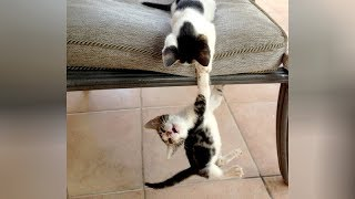 Try NOT TO LAUGH all you want, YOU WILL FAIL! // Super FUNNY ANIMALS