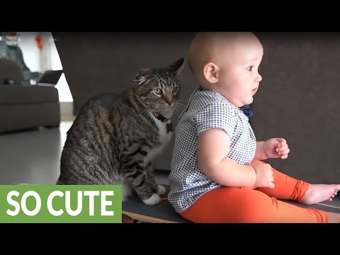Baby and cat enjoy precious skateboard ride together