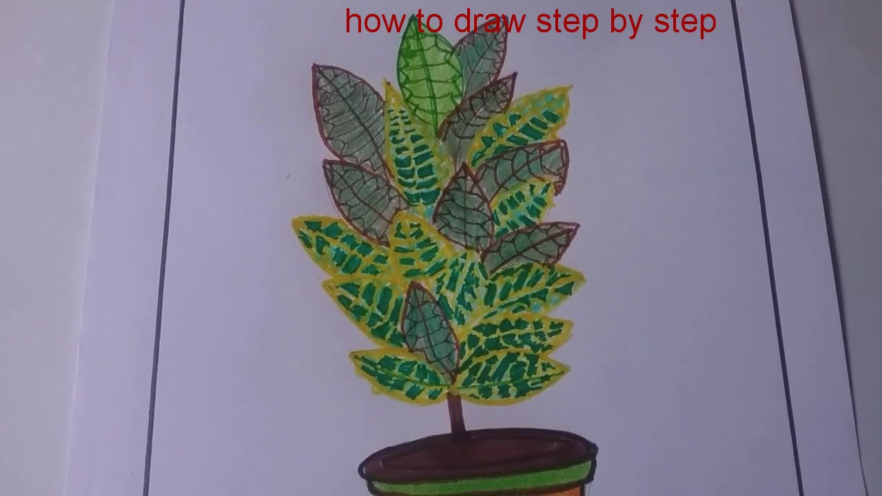 How to draw a beautiful croton plantstep by step /nature drawing/easy drawing for beginners